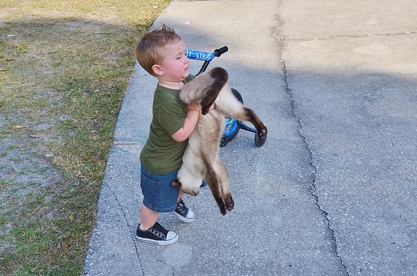 He hasn't quite mastered the art of carrying a cat......